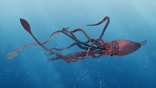 matt-stewart-squid-1